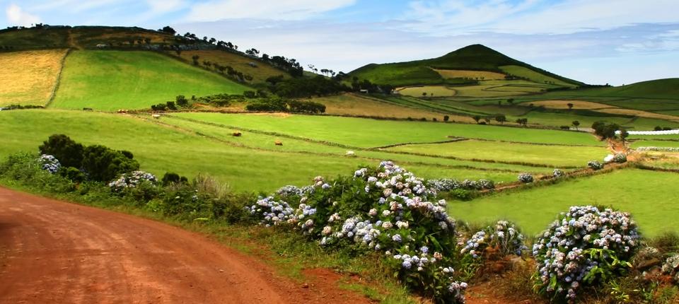 azores fields